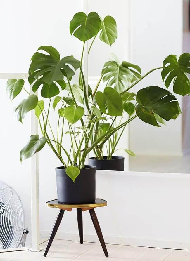 plantas de interior de hoja verde