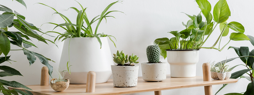 5 plantas de interior faciles de cuidar