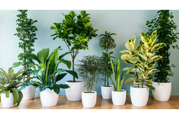 Las 5 mejores plantas de interior fáciles de cuidar